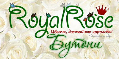 Royal Rose Бутони